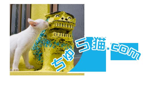 ちゅら猫.com